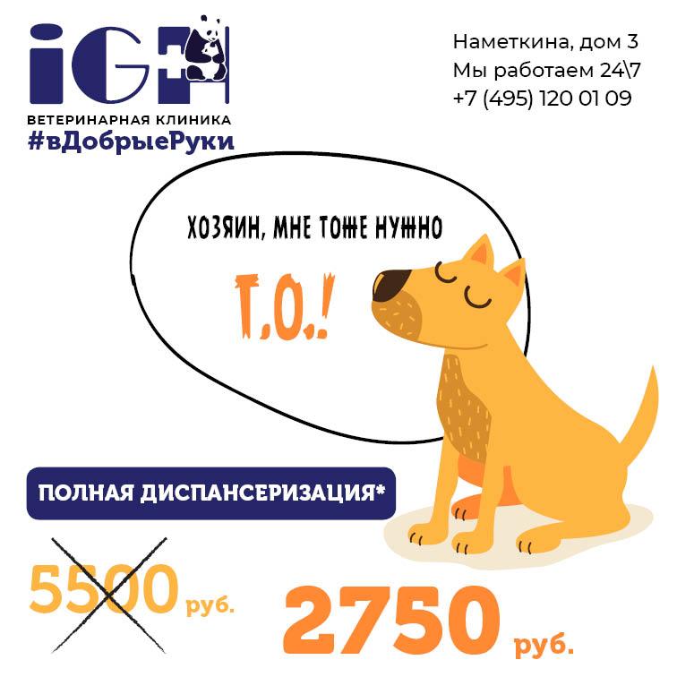 """Акция «Диспансеризация» собак и кошек - ветклиника """"В ..."""